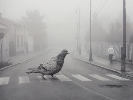 Birdwalk - Dariusz Klimczak