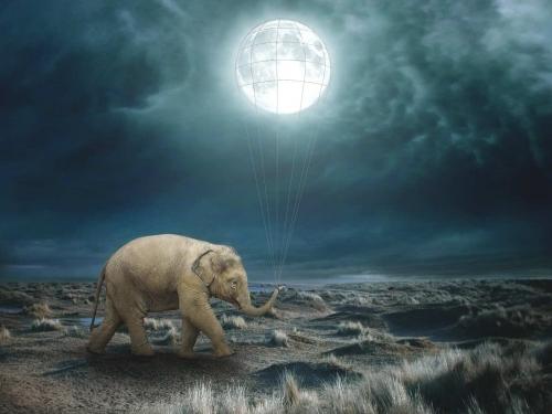 Elephant Moon - Beata Bieniak