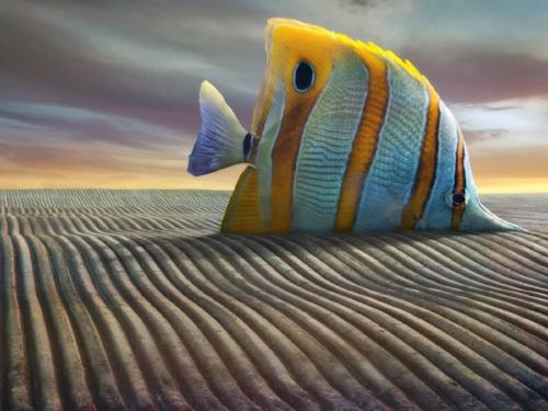 Big Fish - Darius Klimczak