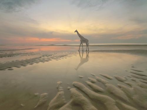 Evening Stroll - Dariusz Klimczak