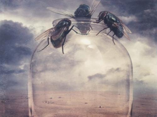 Fly Trap - Sarolta Bán