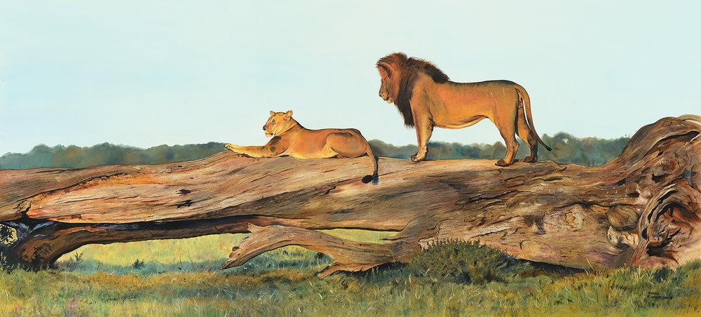 Lions-Art To Dream For.jpg