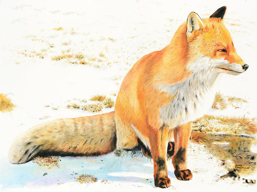 red-fox-art-to-dream-for.jpg