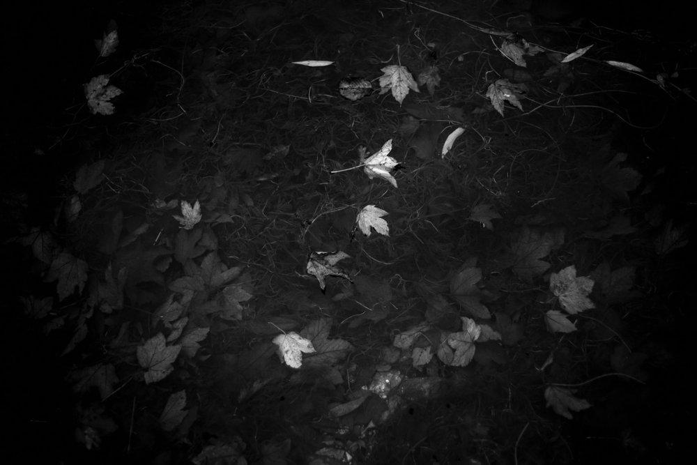 Christopher Manson  West Beck Driffield Leaf Study 61