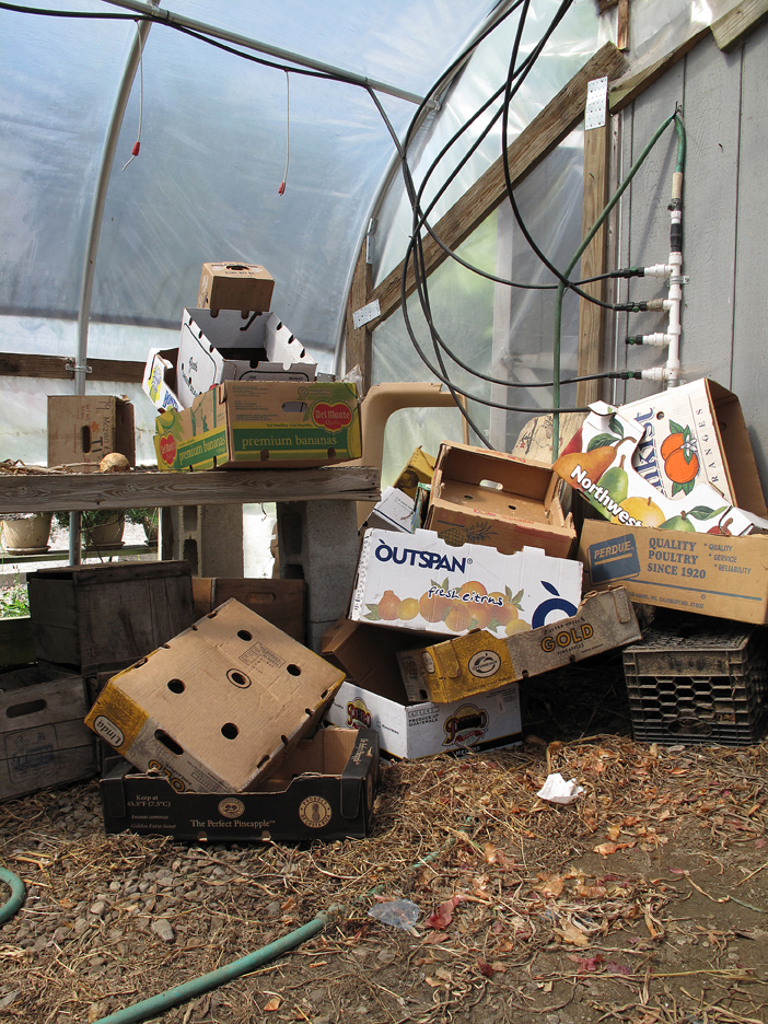 Discarded cartons in greenhouse
