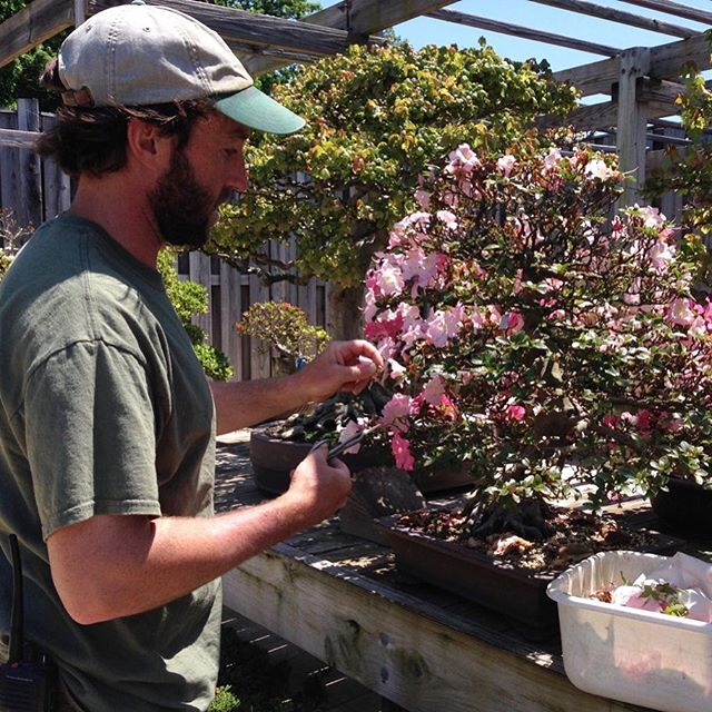 We are pleased to announce that Michael James has been selected as the new Curator of the National Bonsai & Penjing Museum. Michael has served as Assistant Curator since November of 2016 and has been a part of the Museum family for more than a decade. He will begin his new position this month. Congratulations Michael!