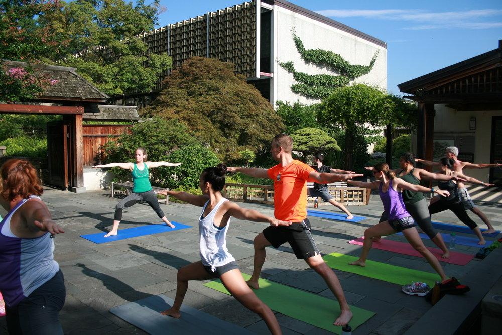 Yoga Among the Bonsai