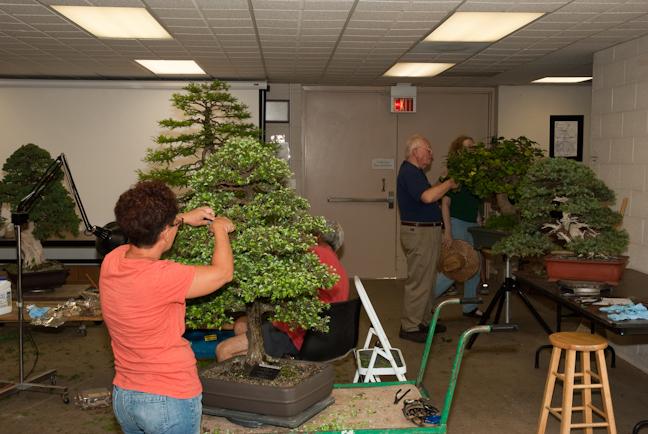 Volunteers working on the trees