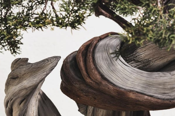 Photographing Bonsai with Stephen Voss
