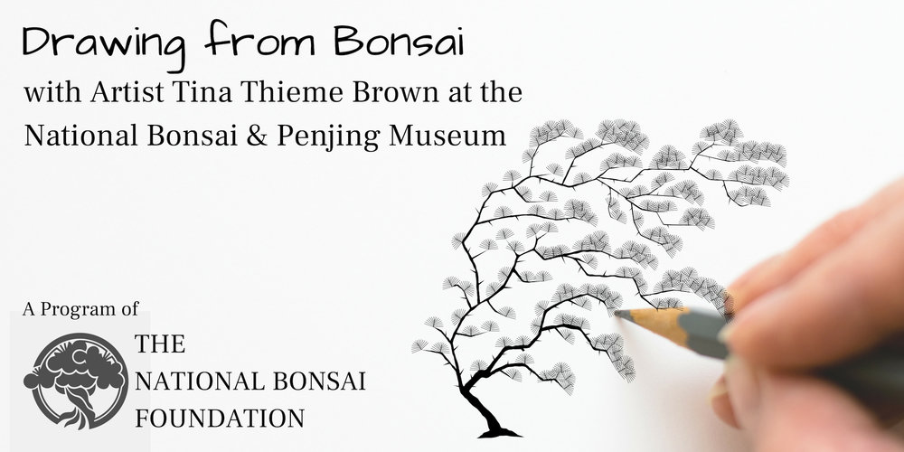 Drawing Bonsai with Artist Tina Thieme Brown