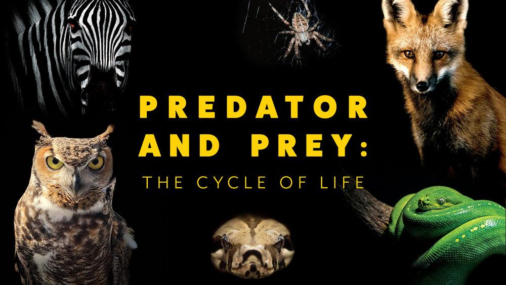 PredatorPrey_web.jpg