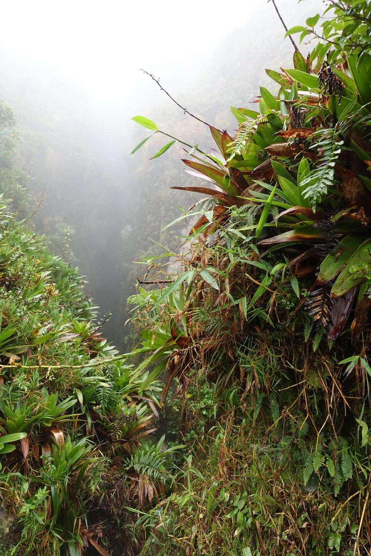 La Grande Soufrière volcano, Basse-Terre, Guadeloupe.