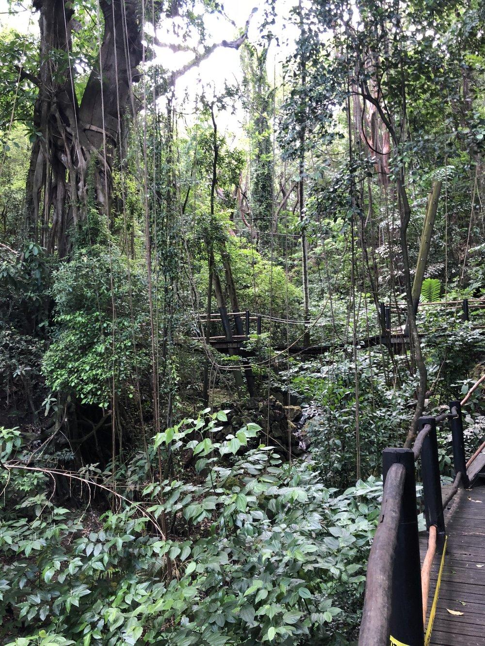 Rainforest Trek @sugar beach.jpeg