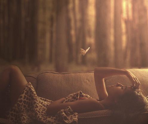 butterflycouch.jpg
