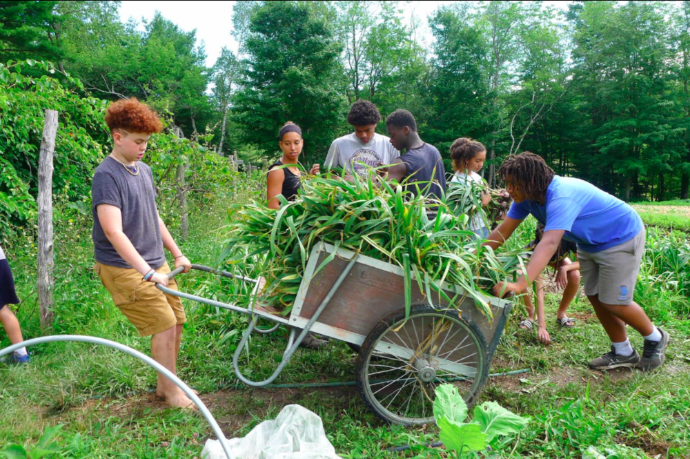 """Soul Fire Farm is not just a farm; it is a place of refuge. It is where intergenerational, queer, and trans Black and Brown people go to be nourished in their mind, body, and soul. My family and I are blessed to be part of this community. So, wherever you are, after you read Farming While Black, make a trip to Grafton, New York, and visit this liberated land.""—Rosa Clemente, journalist and scholar-activist; 2008 Green Party vice-presidential candidate -"