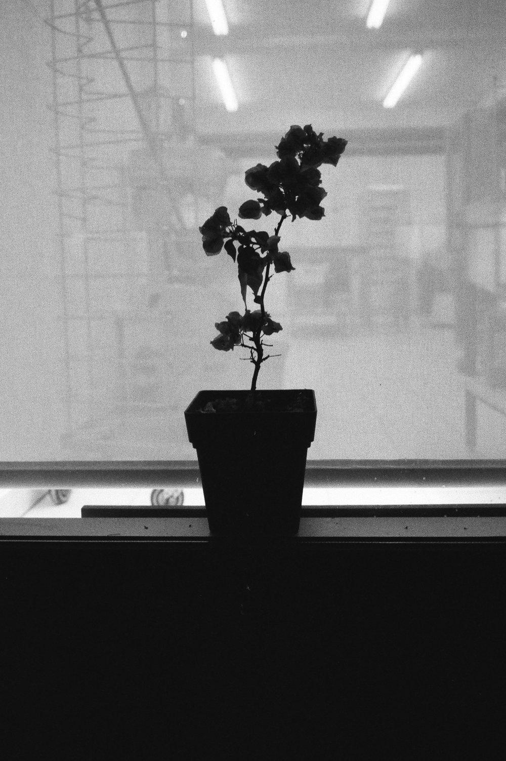 Leica-02-1.jpg