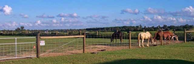 schneiderfarmfence_myfarmfence_horse_fence.jpg