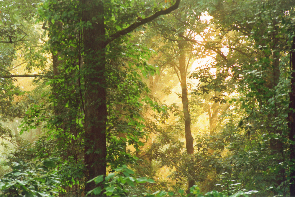 Forest Sunrise 1.jpg
