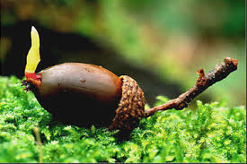 Concerns I Can Help You With Acorn To Oak Insight Llc