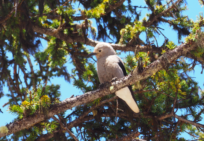 The angriest bird–it followed us all around Lake Louise and watched us grumpily as we ate our snacks.