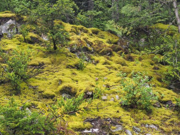 More moss!!!!
