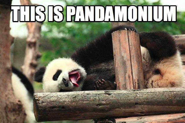 panda-pun.jpg