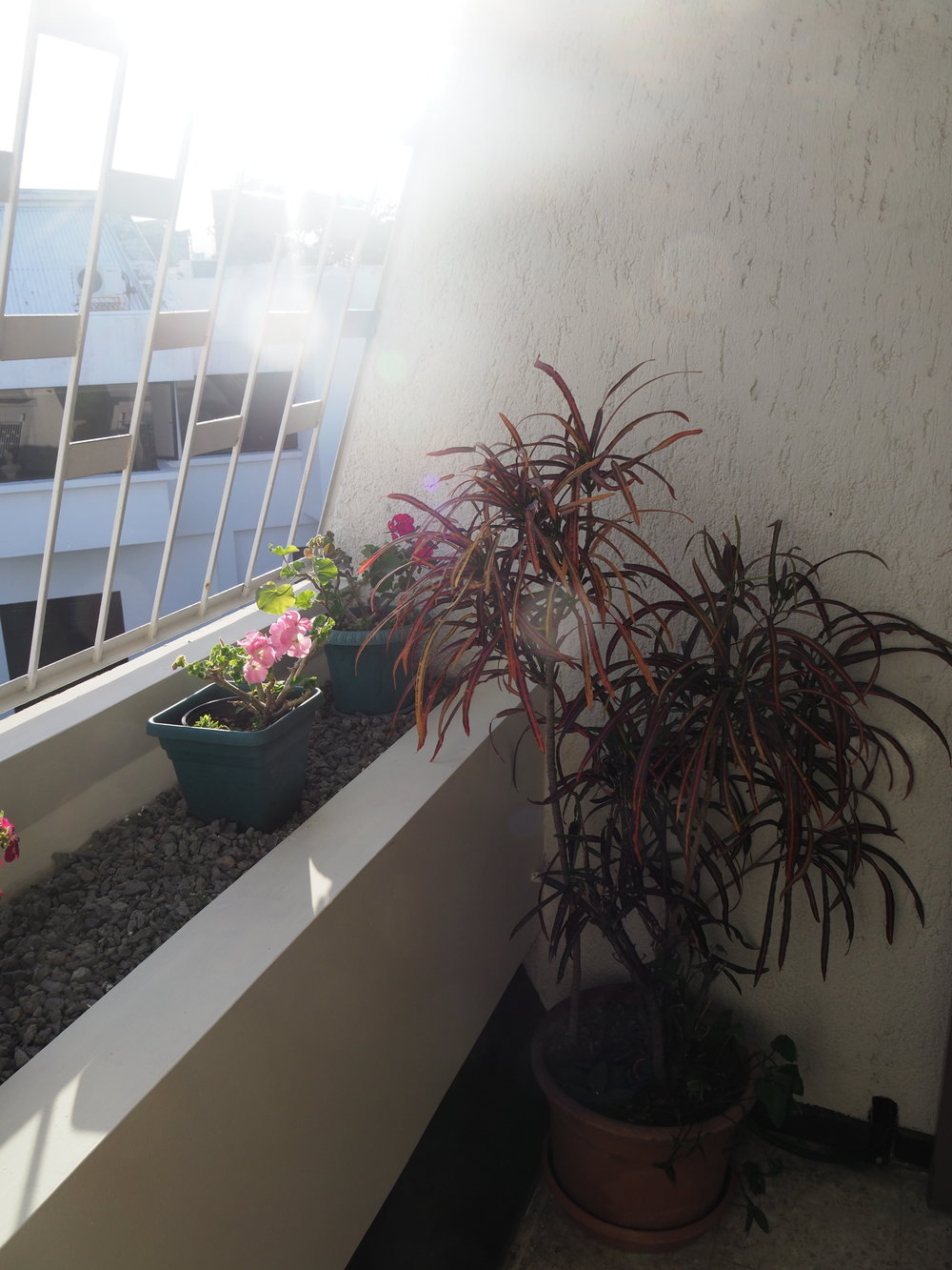 Plants on the caged-in balcony of our Airbnb