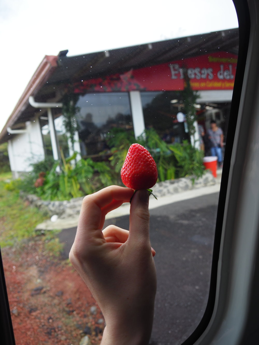 A strawberry from a shop called Fresas de Volcan