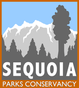 sequoia.png