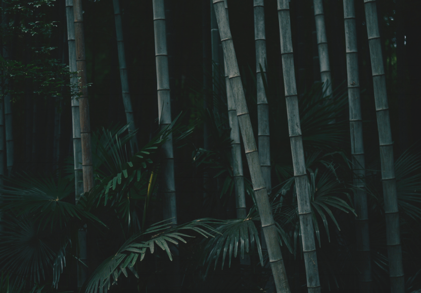 bamboo-trees.png