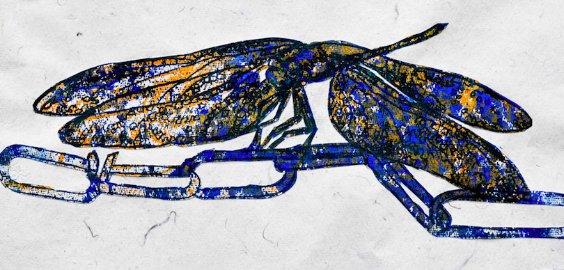 Strength_JWT_DragonflySeries_Monoprint_Ink_37x18cm_DSC_7649-2-34-30-30.jpg20180214-22942-at0v3r.png
