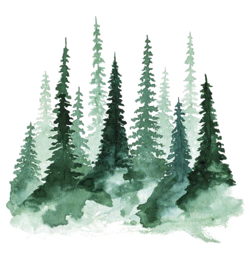 kisspng-study-of-a-tree-watercolor-painting-pine-forest-5a7a0ff71301a4.8900418515179489190779.png