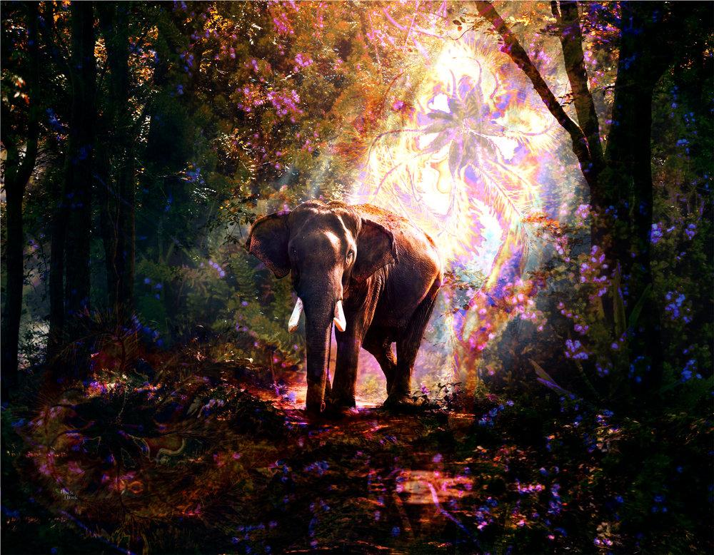 Elephant Forrest