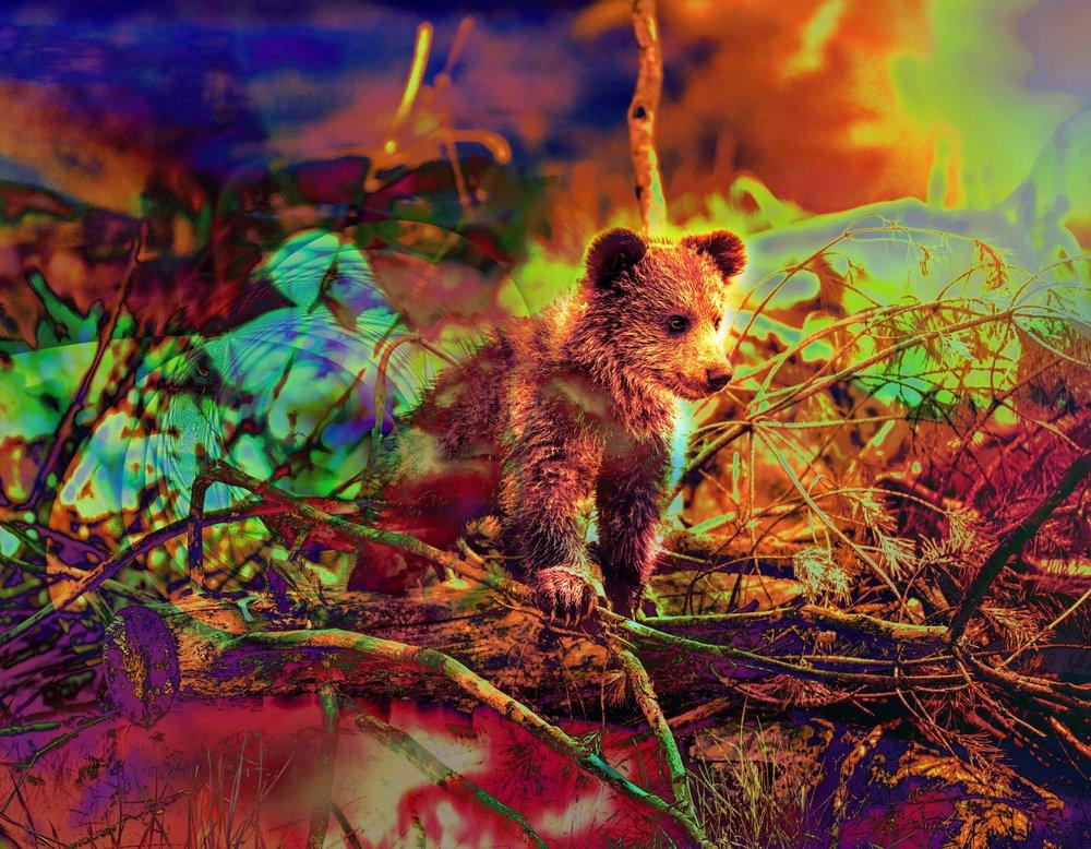 Bear cub 45x60 USA .jpg