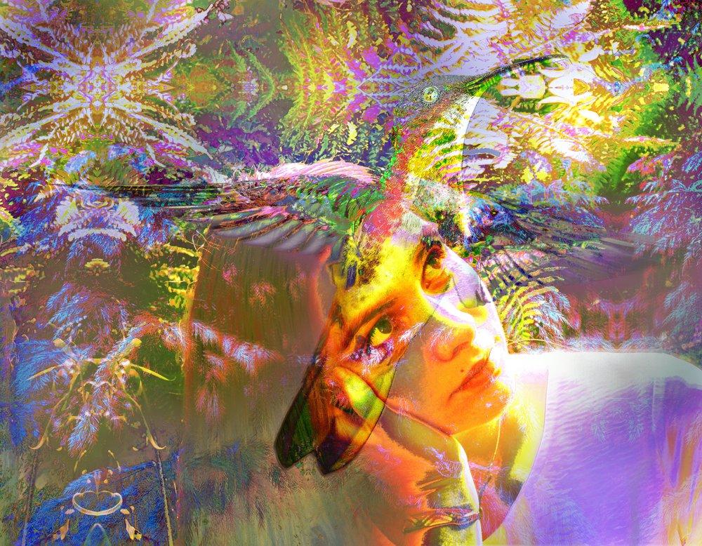 Alina kolibri light.jpg