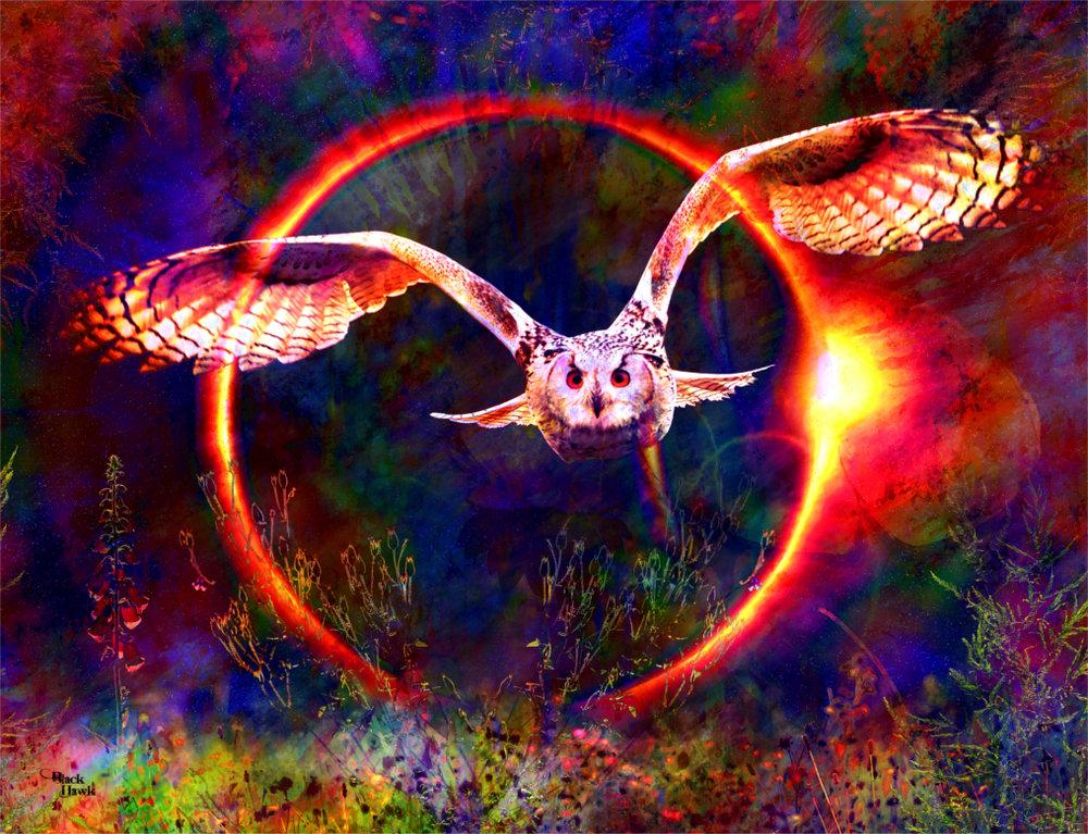 Owl eclipse