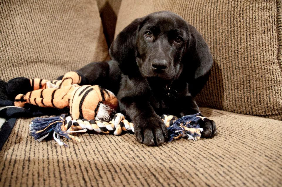 charly_puppy.jpg