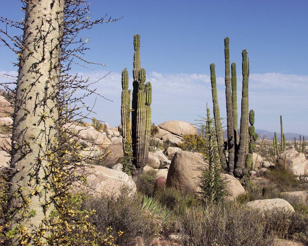 Baja_California_Desert.jpg