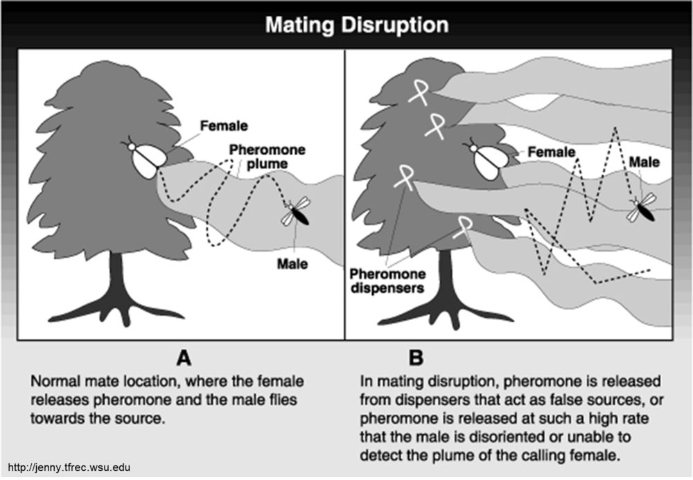 How Mating Disruption Works