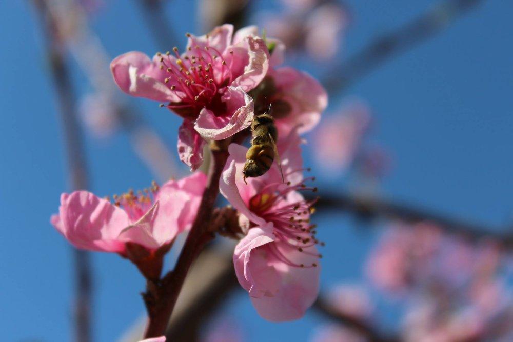 Honey bees thrive.