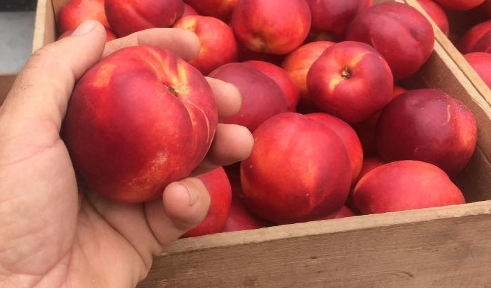 Yellow Nectarines - We grow over four varieties of yellow nectarines. The season starts in August and ends in early September.