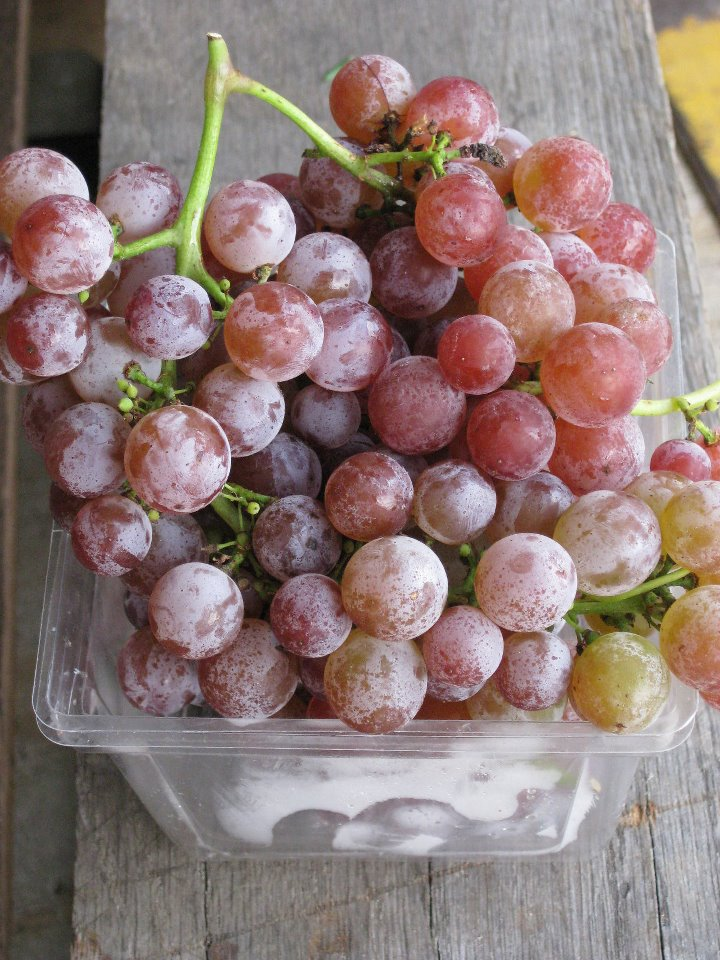 Red Seedless grapes.