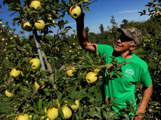 Karl Schlegel looking at apples.png