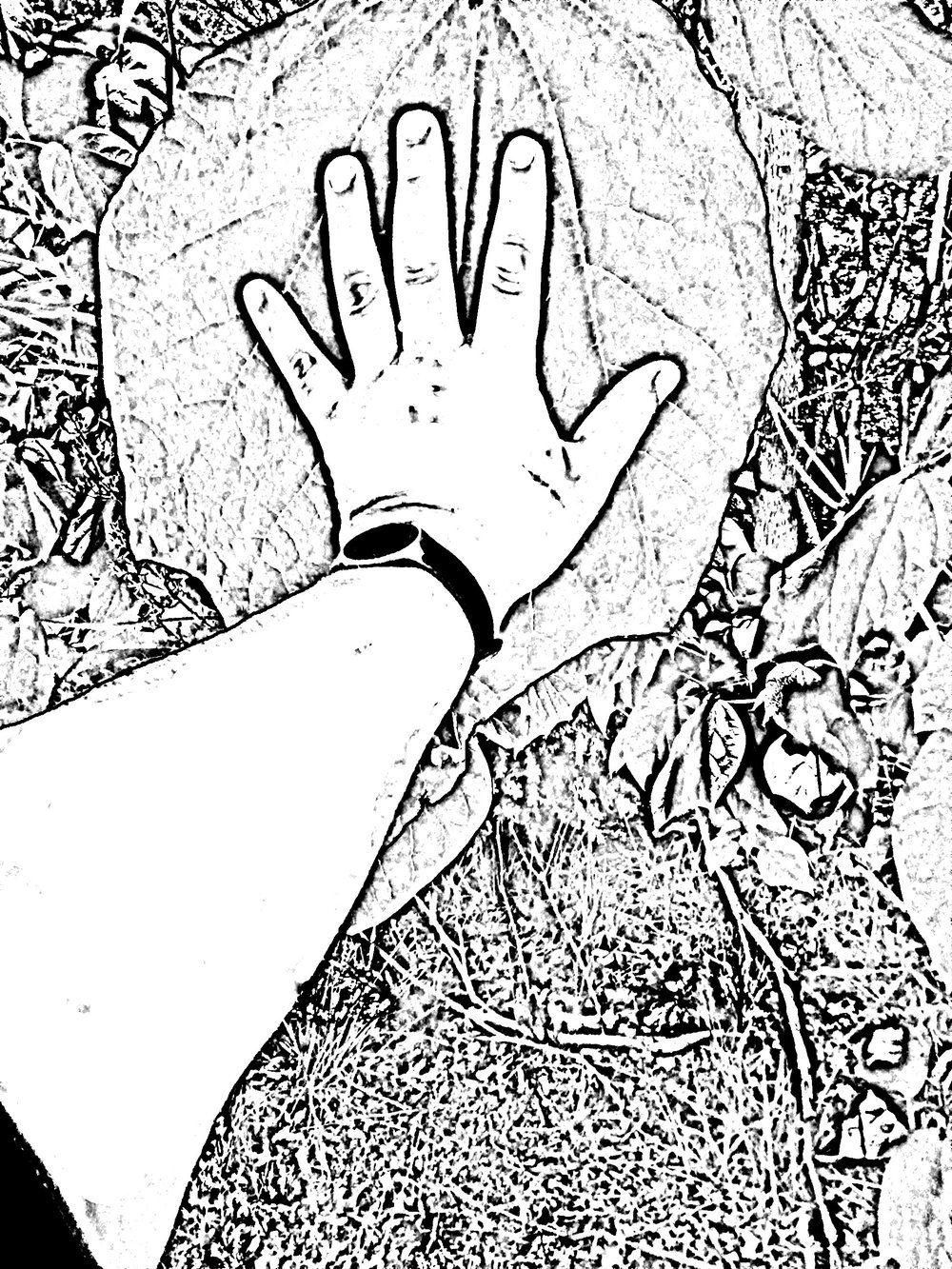 19.hand leaf.jpg