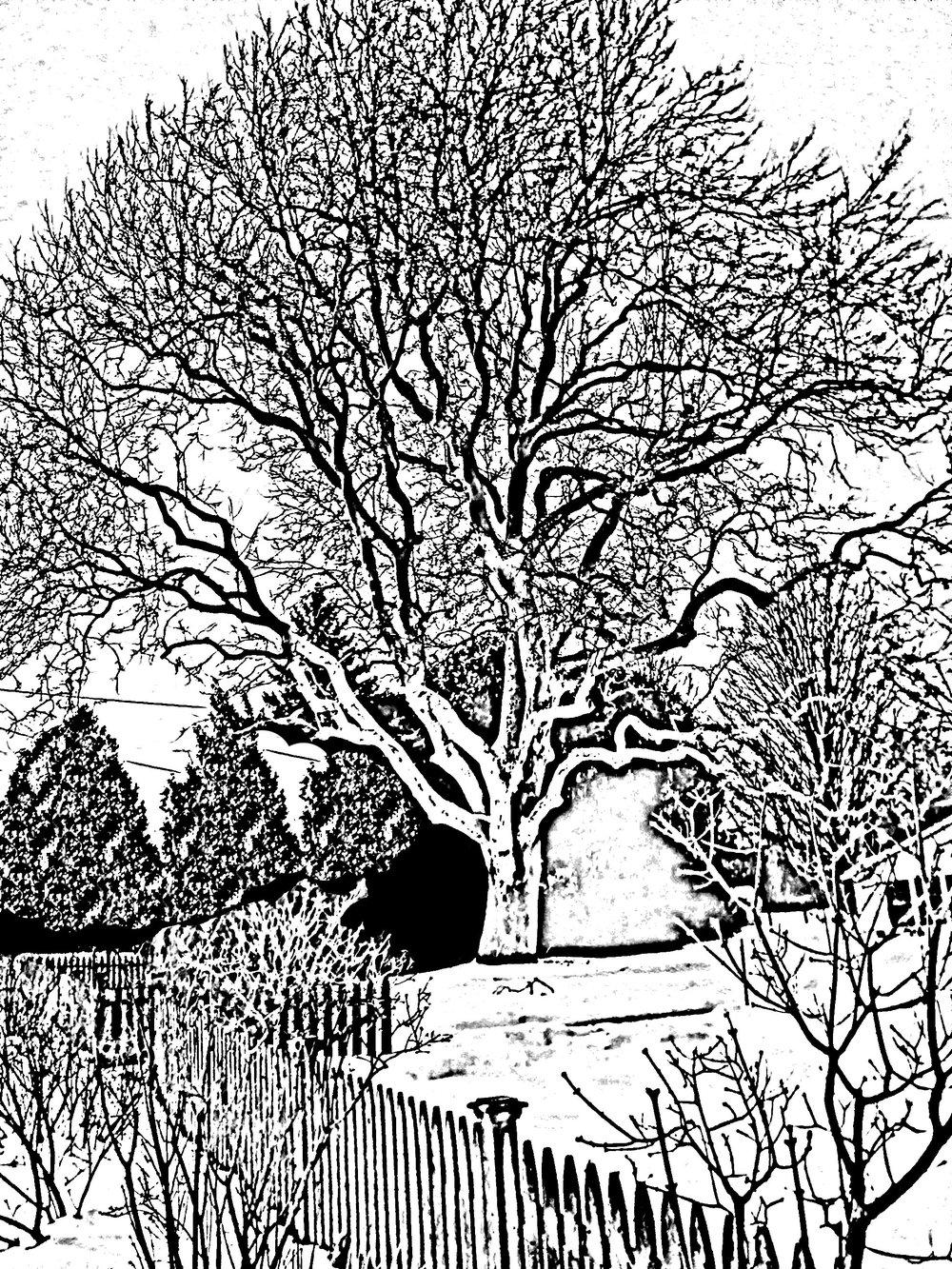 21.tree.jpg