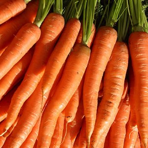 Bambina Carrot