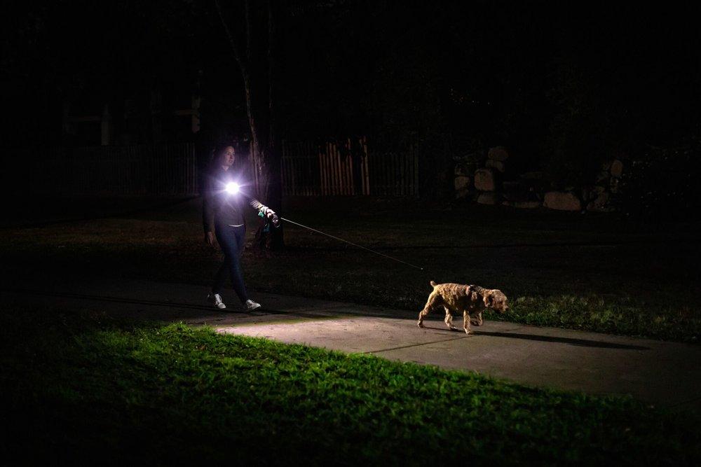 Dog Walking.jpeg