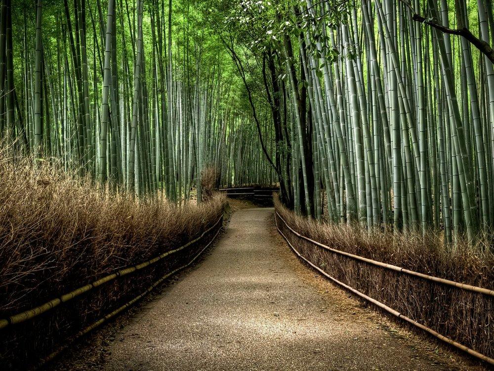 5325971-sagano-bamboo-forest-wallpapers.jpg