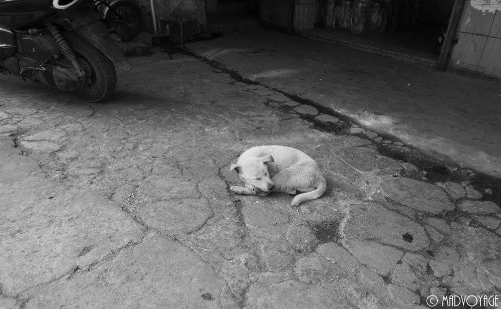 nanping-dog-1.jpg