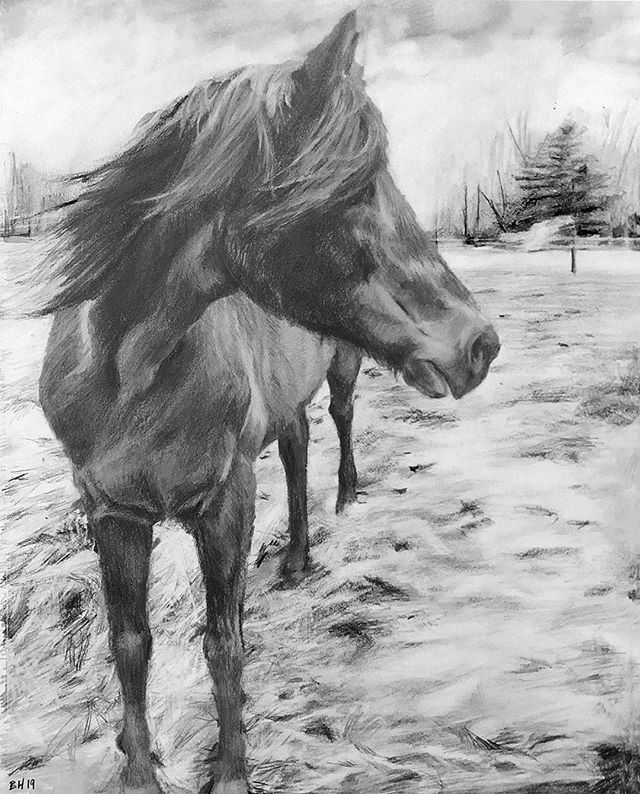 """Charlie, 11"""" x 14"""", 2019 . My first horse portrait commission. 🐎🌾"""